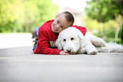 An image of a boy with Cincinnati Children's volunteer dog named Abby.