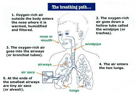 The breathing path explained.