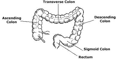 Illustration of a colon