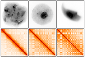 Images showing genetic material in male mice and heat maps for a specific chromosome.