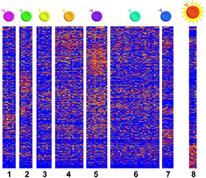 A heat map showing single-cell RNA sequencing data.