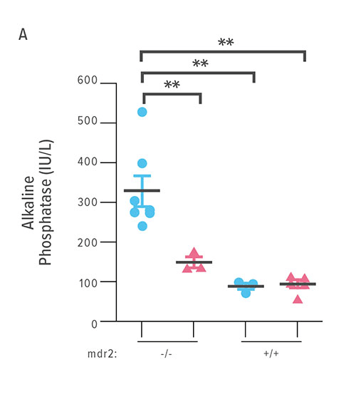 Fig A: This chart compares ALP levels in four groups of mice. Body weights were recorded throughout the 14 days of intervention. ALP levels were determined on blood sampled by cardiocentesis on DOT 14.