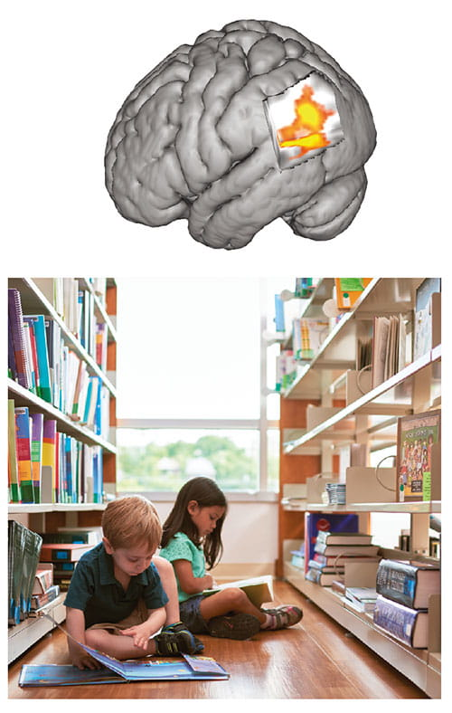 Fig A:  This 3-D image of the posterior left hemisphere—the side typically dominant for language—features a bright area of increased brain activation when children listen to stories read to them. The activated area is the parietal-temporaloccipital multi-modal association cortex, a hub for integrating multi-sensory inputs. This study indicates that children with greater exposure to books and shared reading at home tend to be better at self-generating the visual images associated with imagination and narrative comprehension.