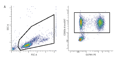 The percentage of olfactomedin-4 (OLFM4)+ neutrophils is higher in those patients with complicated course. The boxed data in the left figure depicts flow cytometric analysis of leukocytes from a patient with septic shock. The boxed data in the right figure shows CD66b positive neutrophils, and the percentage of those neutrophils that express OLFM4.