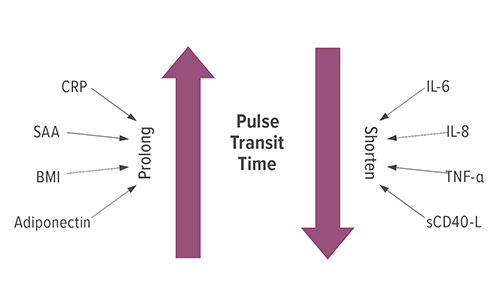 This figure represents how biomarkers, body mass index and other factors affect pulse transit time (PTT) in children with obstructive sleep apnea, a condition that affects nearly 5 percent of U.S. children in the U.S. The factors on the left prolong PTT: C-reactive protein (CRP), serum amyloid A (SAA), body mass index (BMI) and adiponectin, a protein that helps the body regulate glucose levels and break down fatty acid. The factors on the right shorten PTT: interleukin (IL)-6 and 8, tumor necrosis factor (TNF)-α, and a soluble cluster of differentiation (CD)-40 ligand (L).