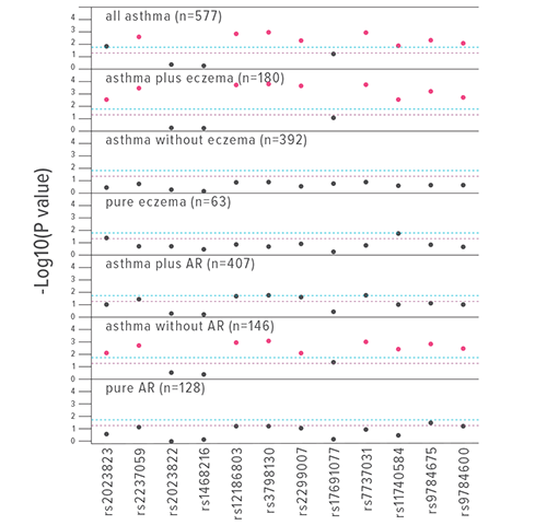 An image showing the associations between tagging single nucleotide polymorphisms in the KIF3A gene and allergic phenotypes compared to non-allergic controls.