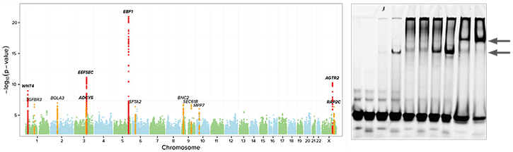 An image showing the results of a genome-wide association study.
