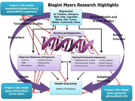 Click to enlarge diagram of Biagini Myers Research Highlights.