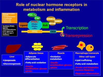 Role of nuclear hormone receptors in metabolism and inflammation.