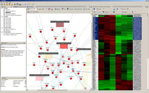 Developing NetWalker: a software platform for network analysis in functional genomics.
