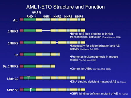 AML1-ETO Structure and Function.