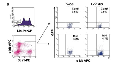 Transgene expressing cells in LSK subpopulation.