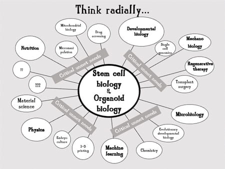 Stem cell biology and organoid biology: Think Radically graphic.