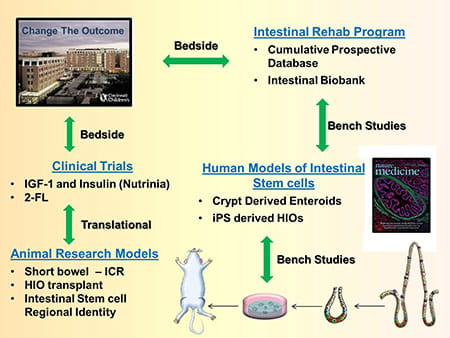 Helmrath Lab's research process.