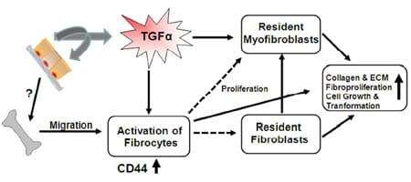 Cellular and Molecular Mechanisms of Pulmonary Fibrosis