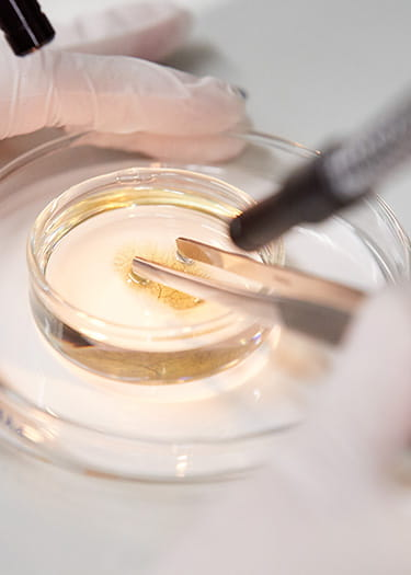 An image of a researcher examining Petri-dish contents.